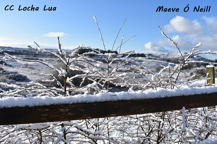 Maeve 1